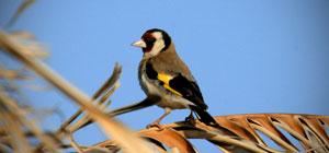 Birdwatching Riserva Vendicari